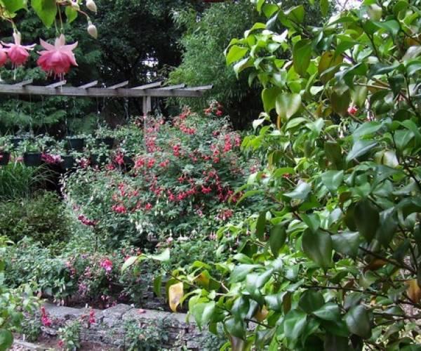 350 soorten fuchsia's zijn te bewonderen in Oudehorne