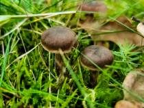 Met Anjulay op paddenstoelenjacht langs de Zanden