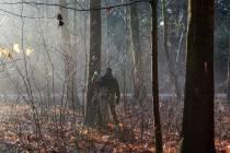 Staatsbosbeheer gaat boswerkzaamheden uitvoeren bij Tjalleberd