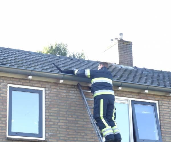 Brandweer haalt kat uit dakgoot aan de Mr. Halbe Binnertsstraat